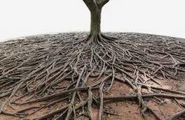albero radici